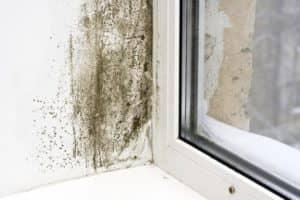 Ak sa prevencia kondenzácie zanedbá, steny môžu začať plesnivieť.