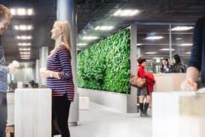 zelená stena